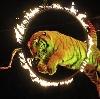 Цирки в Северном
